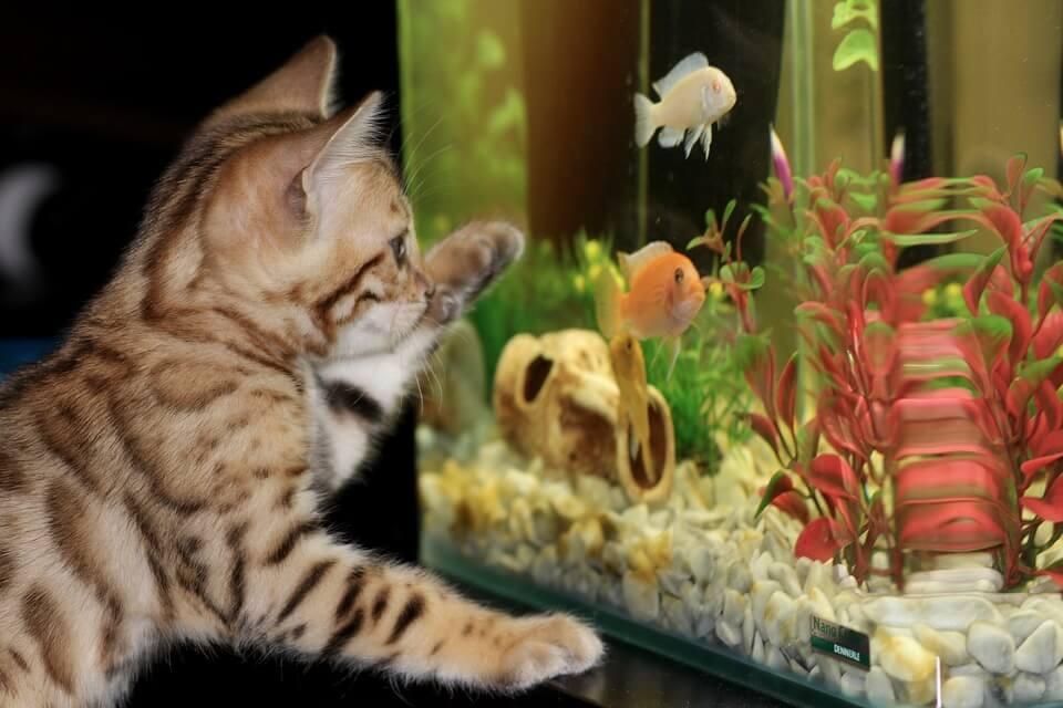 Rewitalizacje akwarium
